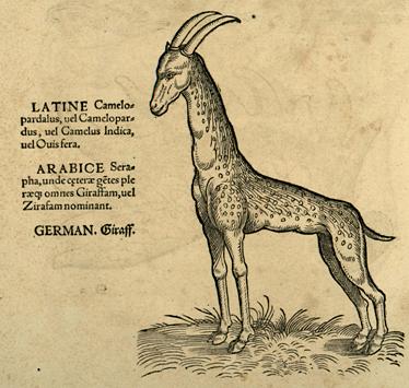 Conrad Gesner, Icones animalium, Zurich: Froschauer, 1553, p. 28