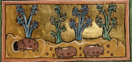 Hedgehogs rolling to pick up food, from a 13th-century English bestiary:British Library, Royal 12 F XIII, fol. 45r.