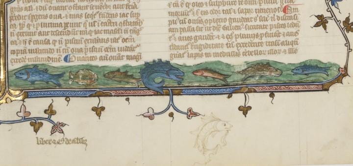 Albertus Magnus, De animalibus, Paris, BnF, Latin 16169