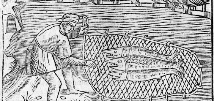Olaus Magnus. Fishing net