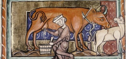 Cutest little mama cow licking her baby bullock, Bod. MS 763.