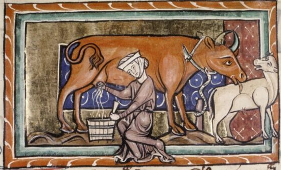 Milking. Bodleian Library MS. Bodl. 764, f. 41v (13th century, second quarter)
